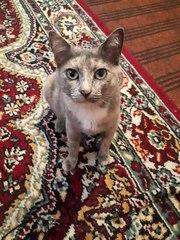 Молодая кошечка Чита очень хочет найти свой дом.